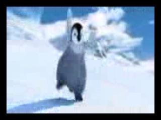 dansul pinguinului(1)