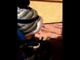 Сынуля играется с нашим маленьким щенком Тайсоном.)